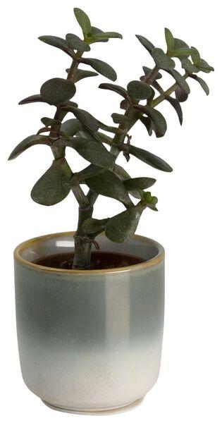 bloempot Ø6.5x6.5 groen - 13312250 - HEMA