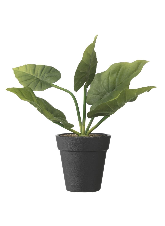 HEMA Kunststof Kaasplant 21 Cm