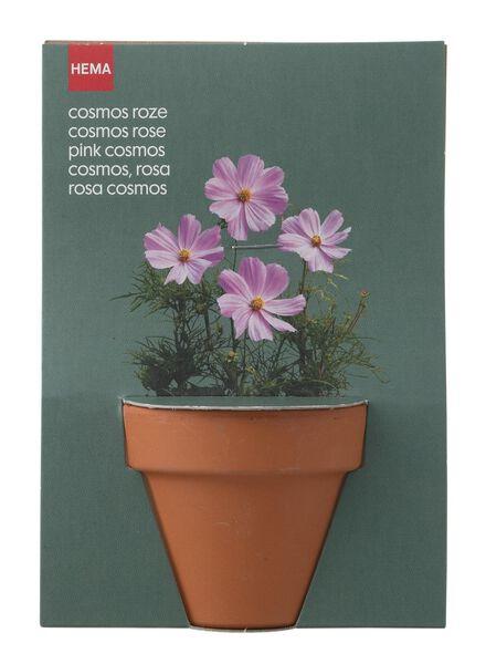 plantzaad voor cosmos in pot - 41820042 - HEMA