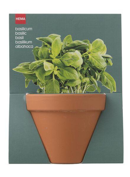 plantzaad voor basilicum in pot - 41820050 - HEMA