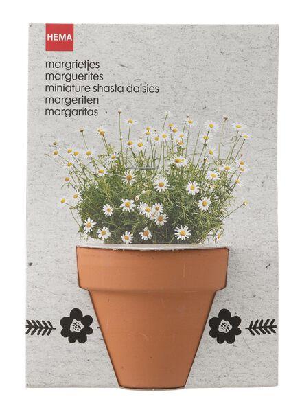 margrietzaadjes met potje Ø 6 cm - 41800115 - HEMA