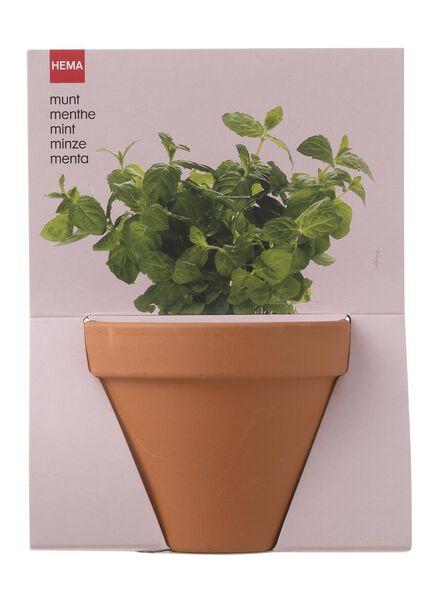plantzaad voor munt in pot - 41820049 - HEMA