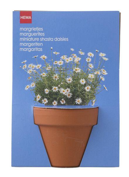 plantzaad voor margrietjes in pot - 41820041 - HEMA