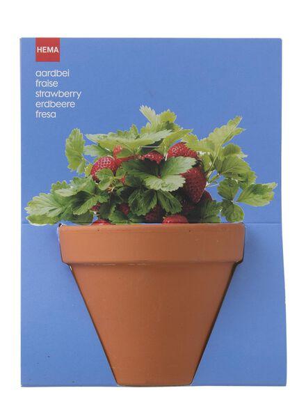 plantzaad voor aardbeien in pot - 41820048 - HEMA