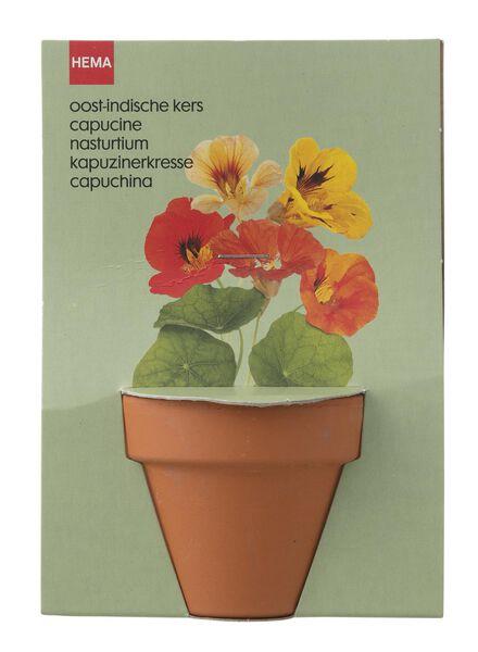 plantzaad voor oost-indische kers in pot - 41820043 - HEMA