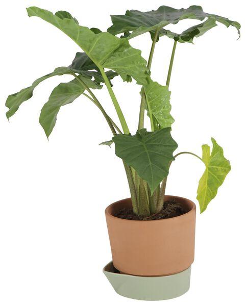 zelfwaterende bloempot Ø25cm terracotta/groen - 41810259 - HEMA